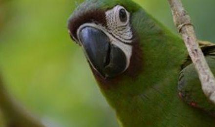 Amazonas Puerto Maldonado Tambopata 4  Dias Tour