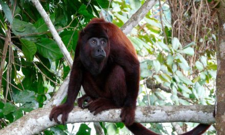 Manu Jungle Ecological Cultural 4 Days Tour